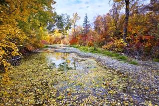 colour palette Calgary
