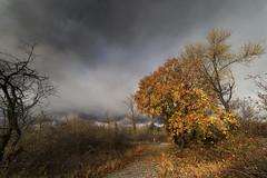 Tableau automnal (Jacques Isner) Tags: automne nature nuages ciel cloud étangnoiret isère champsurdrac pentax pentaxart pentaxflickraward pentaxk1 paysage samyang14mm samyang jacquesisner