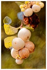 Les petites boules blanches (Jean-Marie Lison) Tags: anderlecht parcastrid eos80d fruits macro