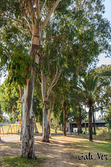 HaYarkon Park (Gali.Nir) Tags: park telaviv israel nature landscape