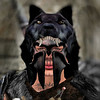 нodυr υlғнednar 2 (axe.fjord) Tags: secondlife roleplay gorean theaxefjord