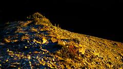 Sunset on Mount Fremont (www.trinterphotos.com) Tags: fremontfirelookout mountrainier ashford washington unitedstates us landscape trinterphotos richtrinter sunset mountain ridge naturalpattern graphic