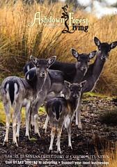 Ashdown Forest Living Nov 2017 (tsbl2000) Tags: nikond810 tamron150600mm ashdownforestliving ashdownforest
