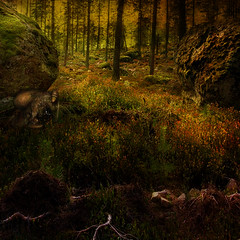Deep in the forest. SS (BirgittaSjostedt) Tags: forest magic nature creation goblin stone moss light landscape square fairytale sliderssunday birgittasjostedt mysterious wood grass tree rock