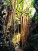 Okinawa Tree (Stuck in Customs) Tags: japan okinawa 80stays rcmemories stuckincustoms stuckincustomscom treyratcliff aurorahdr hdr hdrtutorial hdrphotography hdrphoto tree light foliage trunk branches portrait woman path valley
