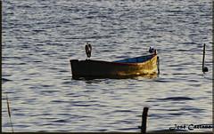 IMG_4545_Waiting (Ajax_pt/Zecaetano) Tags: barco lagoa pond heron bote