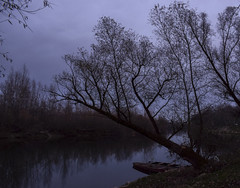 Crooked tree (kisicekpatrik) Tags: tree forest fall nature spooky river water sky boat