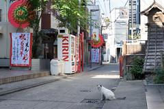 猫 by 23fumi@fuyunofumi - street cat  Nokton 58mm F1.4 SLII N