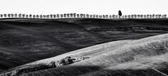 horizon of trees (Blende1.8) Tags: tree trees baum bäume horizont horizon hügel hills hill light shadow shadows landscape landschaft toskanisch tuscan tuscany toskana italia italy italien nikon d5000 70300mm carstenheyer