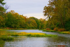 Fall Colors at the River (Anton Shomali - Thank you for over 1 million views) Tags: illinois ill il autumn usa us fall season weather time gpld red yellow green trees tree grass outdoor outside nature county club colors kankakee river picture taken state park