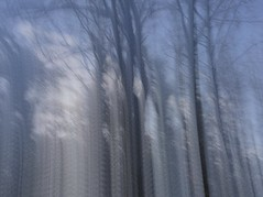 (ijclark) Tags: woodland nature abstract intentionalcameramovement tree iphone iphoneography