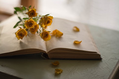 Fading Memories (Captured Heart) Tags: roses yellowroses book openbook bookpages stilllife