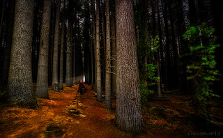 Enchanted forest - DSC4132 ps-7_2k