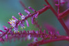 Come closer and see (Hanna Tor) Tags: bloom blossom color light nature blue purple hannator grass grassland petals forest