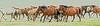 Horses running DSC_0256 (JKIESECKER) Tags: mongolia horses asia centralasia peopleandnature brown animals animalportrait