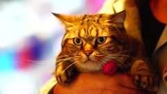 C0085 CZJ V119/1.9 (barryleung28) Tags: cat cats cateye pet catportrait feline gatto gato love sweet tenderness tenerezza tenero gattino dolce adorable cutie kitten happy pets kat katt mio gattuso