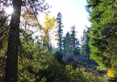 High Lakes Trail (ex_magician) Tags: trail forest highlakestrail klamathfalls oregon moik photo photos picture pictures image interesting lightroom adobe adobelightroom lakeofthewoods fishlake hiking running trailrunning lava