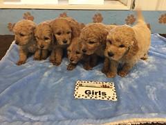 12-3 Roxie Girls_Pic 2