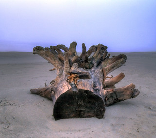 The history of a driftwood
