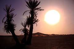 Sahara Sun (T is for traveler) Tags: traveling travel traveler tisfortraveler photography backpacker digitalnomad exploration summer trip africa morocco merzouga desert sahara sand sun canon 1855mm 700d landscape dunes palmtrees nd filter effects