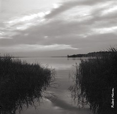 Un matin, au bord du lac. (Argentique) / Morning view on the lake... (Film) (Pentax_clic) Tags: agfa ventura deluxe 66 delta 100 solinar 85mm d76 lac deuxmontagnes argentique nb bw vaudreuil quebec septembre 2017 robert warren