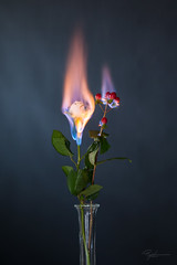 """Burning Flower 2 • <a style=""""font-size:0.8em;"""" href=""""http://www.flickr.com/photos/56830416@N05/38828040171/"""" target=""""_blank"""">View on Flickr</a>"""