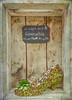 5 dicembre 2017... la scarpetta di Cenerentola nel negozio di un fioraio. ... Cinderella's shoe in a florist's shop (adrianaaprati) Tags: shoe cinderella plants succulents flowers fairytale florist shop december autumn