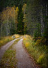 The Forest Road - Zeiss Otus at f/1.4 (magnus.joensson) Tags: sweden swedish småland forest road nikon d810 zeiss otus apo 55mm f14 autumn