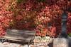 Banco, fuente y Parthenocissus tricuspidata (esta_ahi) Tags: begues baixllobregat parthenocissus tricuspidata parthenocissustricuspidata hiedrajaponesa parravirgen viñavirgen vitaceae flora plantas trepadoras otoño barcelona spain españa испания