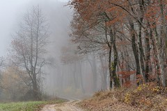 *November Day II* (albert.wirtz) Tags: fog mist tree forest wood nebbia niebla brouillard brume bruma waldweg unpavedroad road way dirtroad meadow neblig dunst dusty dunstig foggy turningleaves laubfärbung foliage moseltal piesport moselhöhenweg moselsteig seitensprungweg klausen eifel mosel moseleifel eifelmosel wandern hiking trail moselletrail wald buchen eichen oak beechtree misty mistyworld autumn autunno herbst herbstlich albertwirtz albertwirtzphotography photography nature natura natur stimmungsvoll autumnmood herbststimmung nikon d700 landschaftsfotografie paesaggi paysages