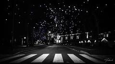 Le Touquet (Fabouh) Tags: touquet noel christmas blackandwhiteonly bynight light instagram instanature instagood igers igersarras igersfrance pasdecalais pasdecalaistourisme hautsdefrance hautsdefrancetourisme france canon canonphoto canon700d samyang
