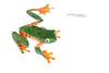 Cruziohyla calcarifer (Matthieu Berroneau) Tags: cruziohyla calcarifer cruziohylacalcarifer splendid leaf frog treefrog splendidleaffrog splendidtreefrog rana de hoja espléndida ranadehojaespléndida ranaespléndida mono ranamono tigre rayada ranatigre ranadehojarayada barred barredleaffrog trip herpéto herpeto 2017 amphibia amphibian amphibien anoure anoura anouran tailless amphibians grenouille sony alpha macro field herp herping anura wildlife nature varliagyviai animal animaux sonya7ii sonyalphaa7ii sonya7mk2 sonyalpha7mark2 sonyalpha7ii 7ii 7mk2 sonyilce7m2 28 fe f28 rainette hyla treehigh key fond textbook white fondblanc blanc highkey