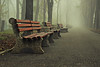 Cold, foggy and lonely... (Hasan Yuzeir 📷) Tags: cold foggy lonely town bench perspective hasanyuzeir canon 1300d white