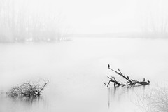 In the mist (marielledevalk) Tags: bnw blackandwhite dutch holland morning wood bird mist winters fortvuren