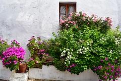 Alentejo Spring (Jocelyn777) Tags: flowers windows facade white whitehouses texture villages monsaraz alentejo portugal travel