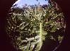 Zoológico de Cali (Alveart) Tags: alveart lomo lomography fisheye fisheye2 luisalveart zoo valle cali colombia zoologico follaje vegetacion suramerica latinoamerica latinamerica southamerica