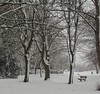 Winter in the park (mrsf1958) Tags: winter wintertrees park bench snow coleshill warwickshire ilovewinter photooftheday square squareformat nature naturephotography weather winterweather branches fortheloveofbranches winterwonderland