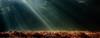 Sunbeams above heather field (Henk Verheyen) Tags: garderen grootheideborgh nl buiten heather heide herfst landscape landschap outdoor sunrise sunbeams forest