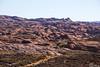 Sandstone Jungle (isaac.borrego) Tags: canyon desert glencanyon nationalrecreationarea escalante utah canonrebelt4i