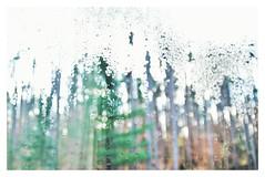Sunlit condensation (Ele June) Tags: condensation backyardbokeh throughawindow sunlight