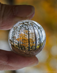 miniature world (sure2talk) Tags: macromondays fingertips miniatureworld crystalball refraction flipped bokeh shallowdof trees park autumncolour autumn golden nikond7000 nikkor1855mmf3556afs macro closeup smileonsaturday madeofglass