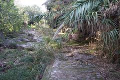 Ψίνθος (Psinthos.Net) Tags: ψίνθοσ psinthos november autumn φθινόπωρο νοέμβρησ νοέμβριοσ φύση nature valley κοιλάδα psinthosvalley κοιλάδαψίνθου κοιλάδαψίνθοσ reeds stubbles καλάμια καλαμιέσ φθινοπωρινάφύλλα φύλλαφθινοπώρου autumnleaves leaves φύλλα πεσμέναφύλλα fallenleaves path μονοπάτι λιθόστρωτο paved χόρτα greens ουρανόσ sky ρυάκι rivulet