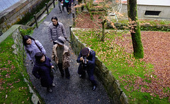 People visit autumn garden in Kyoto, Japan (phuong.sg@gmail.com) Tags: asia asian autumn color colorful culture famous forest garden japan japanese kansai kitano koyo kyoto landmark leaves maple momiji park path pathway people shrine sightseeing tenmangu tourism trail travel tree visit visitor
