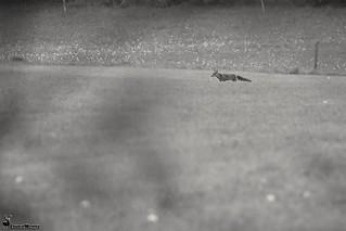Une p'tite photo en noir et blanc.