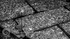 DSC07512 (O KDUKO) Tags: araraquara blackandwhite blackandwhitephotography pictureoftheday blackandwhitephoto photography bnwcaptures monochrome monochromatic instablackandwhite monoart instabw bw bwstylesgf artgallery visualart bwphotooftheday photoshoot bwstyleoftheday aesthetics streetphotography arts