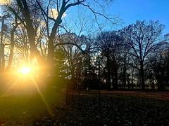 evening at the park (#KPbIM) Tags: 2017 fall november jaycee light glare sun autumn evening starr trees serene park michigan royaloak rays