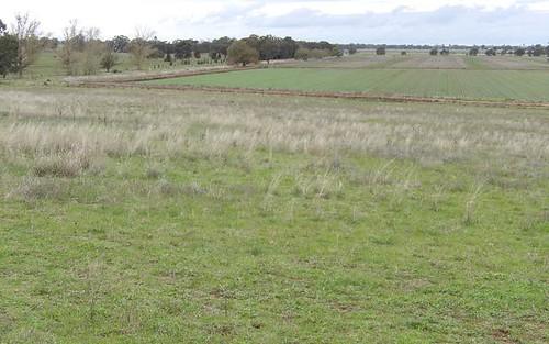 638 Caldwells Rd, Barooga NSW