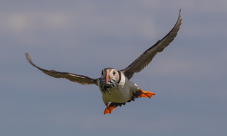 summers day in the farnes