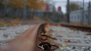Autumnal glimpses: Among the tracks