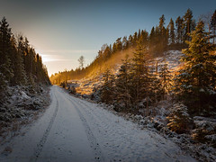 20171115003563 (koppomcolors) Tags: koppomcolors sweden sverige scandinavia forest skog winter värmland varmland vinter